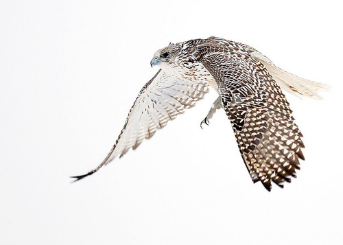 Speed? What Speed? The Falcon, by Sebastian Trapp: Design ...
