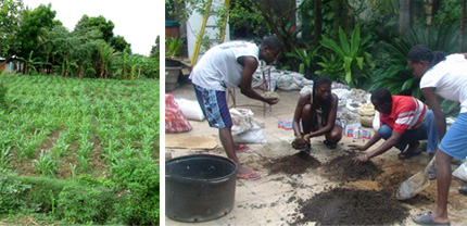 Haiti and the Potential of Permaculture