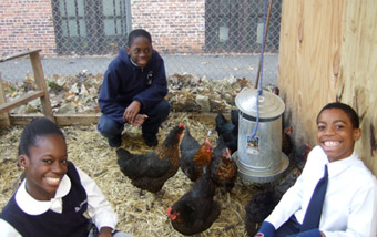 St. Augustine School Chicken Project